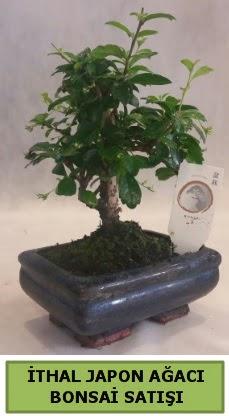 İthal japon ağacı bonsai bitkisi satışı  Hakkari çiçek gönderme