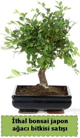 İthal bonsai saksı çiçeği Japon ağacı satışı  Hakkari çiçek yolla , çiçek gönder , çiçekçi
