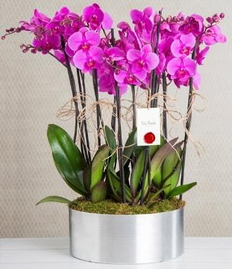 11 dallı mor orkide metal vazoda  Hakkari İnternetten çiçek siparişi
