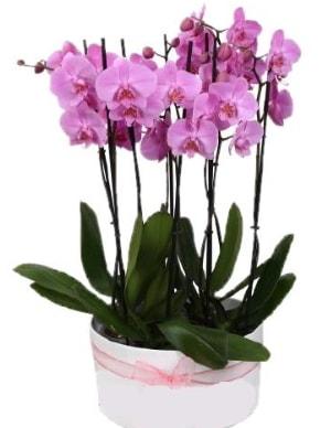 Beyaz seramik içerisinde 7 dallı mor orkide  Hakkari çiçek gönderme