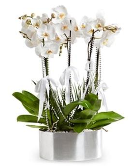Beş dallı metal saksıda beyaz orkide  Hakkari çiçek gönderme sitemiz güvenlidir