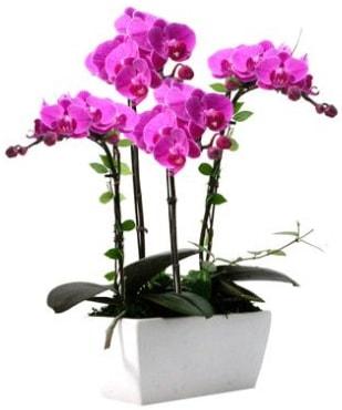 Seramik vazo içerisinde 4 dallı mor orkide  Hakkari çiçekçi telefonları
