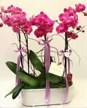 Beyaz seramik içerisinde 4 dallı orkide  Hakkari çiçek , çiçekçi , çiçekçilik