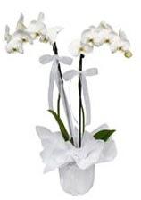 2 dallı beyaz orkide  Hakkari kaliteli taze ve ucuz çiçekler