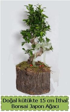 Doğal kütükte İthal bonsai japon ağacı  Hakkari çiçek yolla