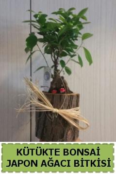 Kütük içerisinde doğal bonsai ağacı  Hakkari çiçek gönderme