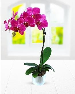 Tek dallı mor orkide  Hakkari çiçekçi telefonları