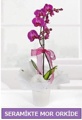 Seramik içerisinde birinci kalite tek dallı mor orkide  Hakkari çiçek yolla , çiçek gönder , çiçekçi