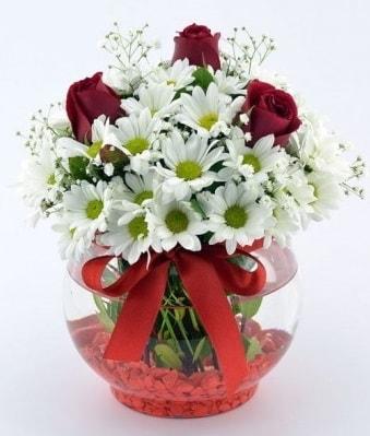 Fanusta 3 Gül ve Papatya  Hakkari çiçek siparişi sitesi