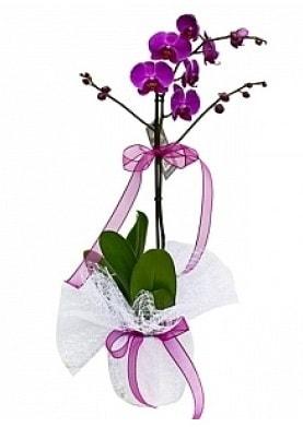 Tekli Mor Orkide  Hakkari çiçek gönderme sitemiz güvenlidir