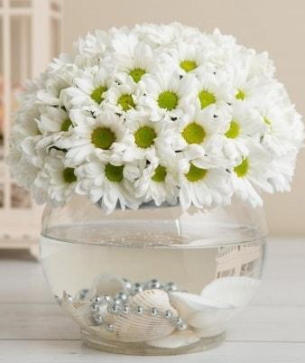 Fanusta beyaz Papatya  Hakkari çiçekçi telefonları