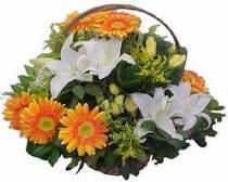 Hakkari yurtiçi ve yurtdışı çiçek siparişi  sepet modeli Gerbera kazablanka sepet