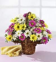 Hakkari internetten çiçek satışı  Mevsim çiçekleri sepeti
